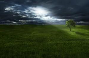 amazing-lone-tree_960_720