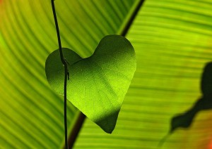green-leaf-heart_960_720