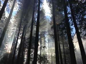 sunlight-forest_960_720