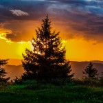 sunset_evergreen_960_720