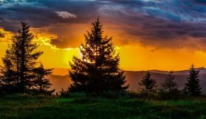 sunset_evergreen_960_720