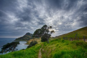 new-zealand-path-by-water_960_720