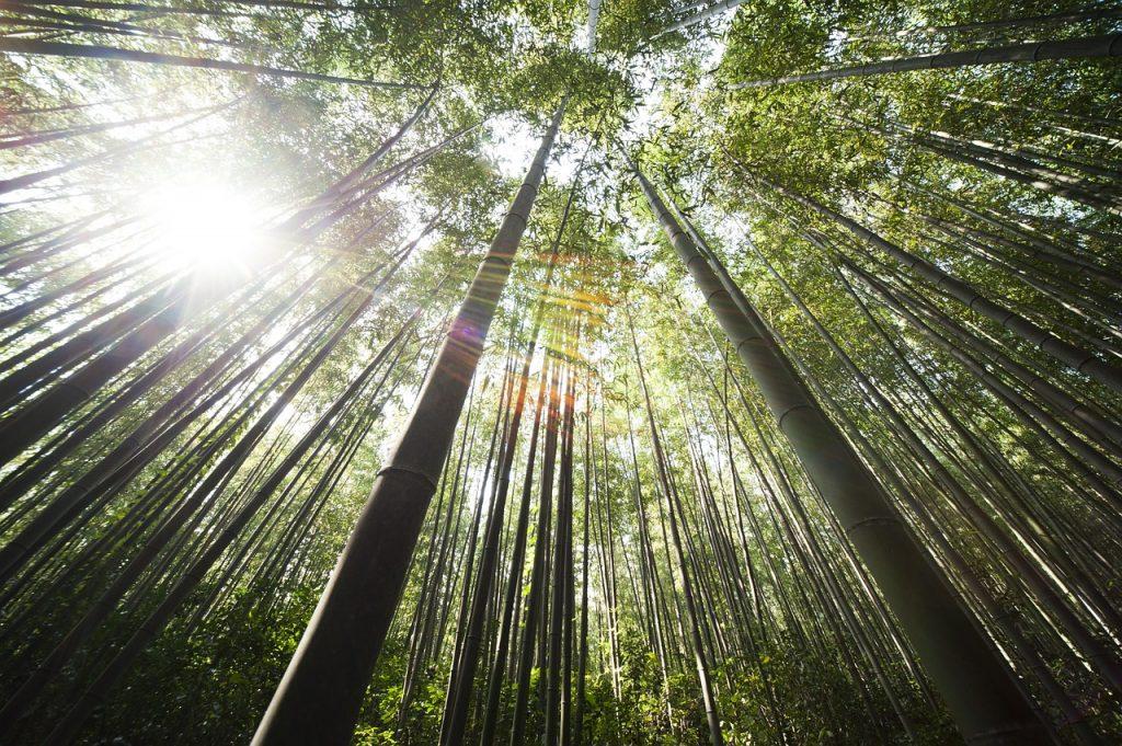 bamboo_1280_851