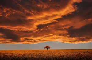 amazing-plains-fall_960_720