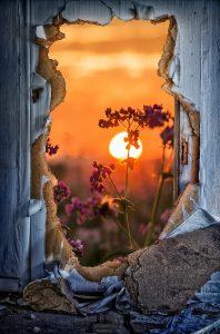 door-flower-sunlight