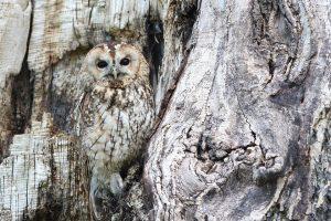 hidden-wisdom-owl_960_720